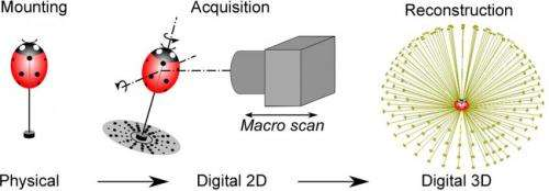 'Off-the-shelf' equipment used to digitize insects in 3-D