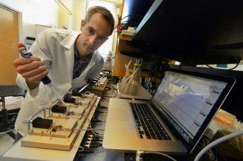 Researcher works to block the blood-vessel dysfunction that occurs in diabetes