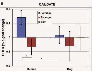 Scent of the familiar: You may linger like perfume in your dog's brain