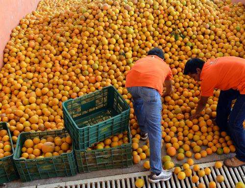 Tracking pesticide residues in citrus allows export