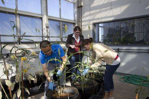 Building the framework for the future of biofuels