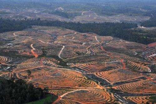 Deforestation in the concession of Karya Makmur Abadi that is being developed for a palm oil plantation, in East Kotawaringin, I