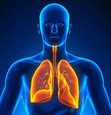 Immune system research also may help reveal new asthma clues