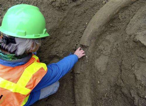Owner lets museum to dig up Seattle mammoth tusk