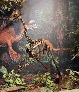 Paleontologists announce discovery of Anzu wyliei