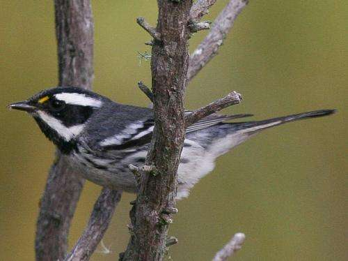 Small birds capitalize on weather patterns during epic migrations
