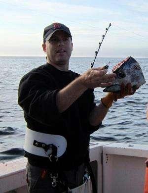 New techniques for estimating Atlantic bluefin tuna reproduction