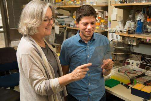Scientists discover an on/off switch for aging cells
