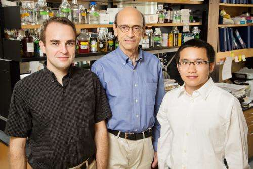 Scientists discover a new role for estrogen in the pathology of breast cancer