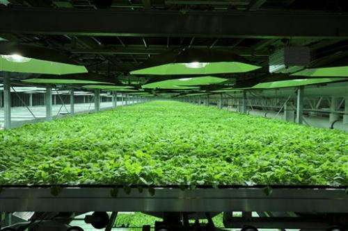 Ebola puts focus on drugs made in tobacco plants