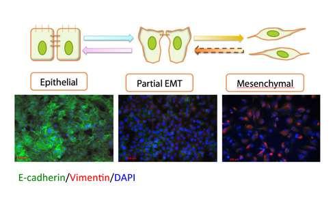 Researchers prove mathematical models can predict cellular processes