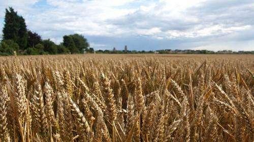 Agricultural research extends carbon capture depths