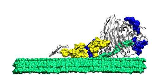 Supercomputer exposes enzyme's secrets