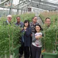 World's largest drought resistance experiment on chickpeas under way at UWA
