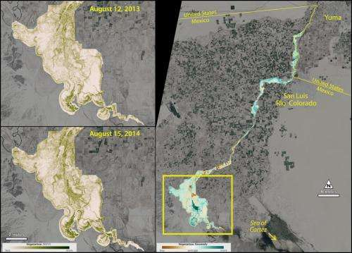 Satellite sees green-up along Colorado River's Delta after experimental flow
