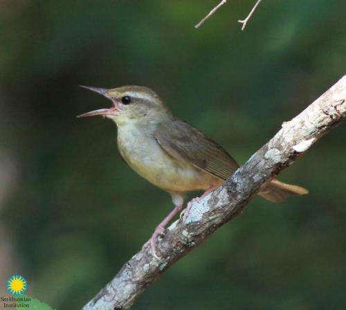 Scientist discovers populations of rare songbird in surprising new habitat