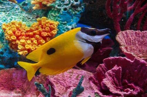Algae under threat from invasive fish