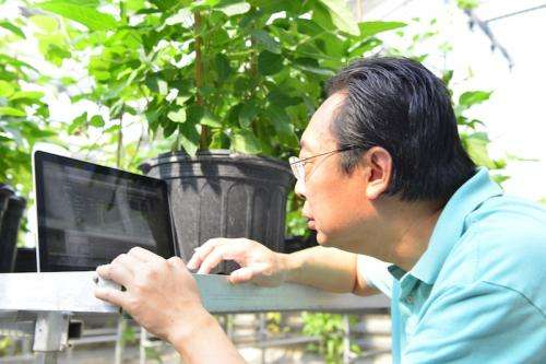 Researchers develop free online database for soybean studies
