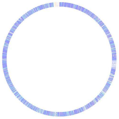 Scientists sequence complete genome of E. coli Strain responsible for food poisoning