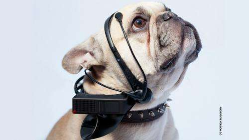 Wearable tech isn't just for humans – dogs, cats and chickens are sporting it too