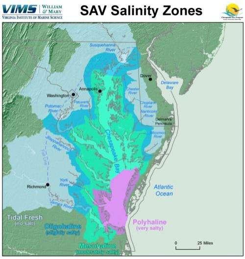 Abundance of Chesapeake Bay's underwater grasses increases
