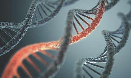 A civil war inside our cells: Scientists show how our bodies fight off 'jumping genes'