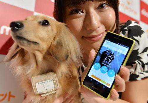 """A dog wears a """"Petfit tag"""" equipped with 3G and Bluetooth from Japan's largest mobile phone carrier NTT Docomo during"""