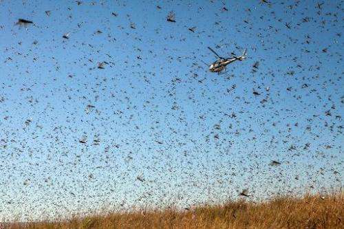 A helicopter dumps pesticide to combat a swarm of locusts threatening to reach Amparihibe village on May 7, 2014