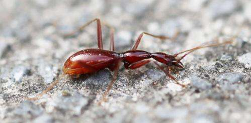 A kingdom of cave beetles found in Southern China