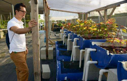 Alumnus finds solutions for food insecurity through aquaponics