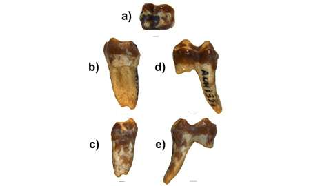 Ancient tooth offers clues to how and when monkeys left Africa