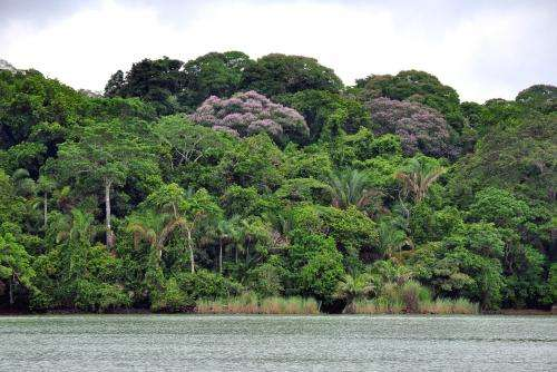 A new explanation for the dominance of generalists among tropical trees
