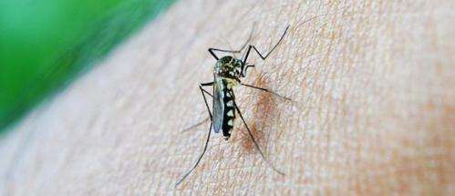 Antibodies discovery could lead to universal dengue vaccine
