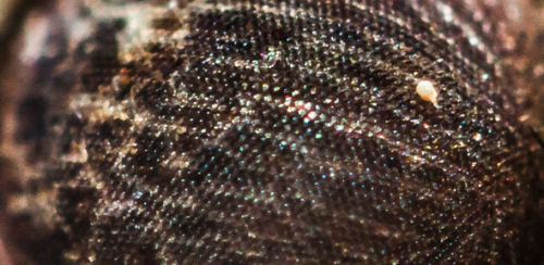 Antireflective coating mimicks the structure of moth eyes