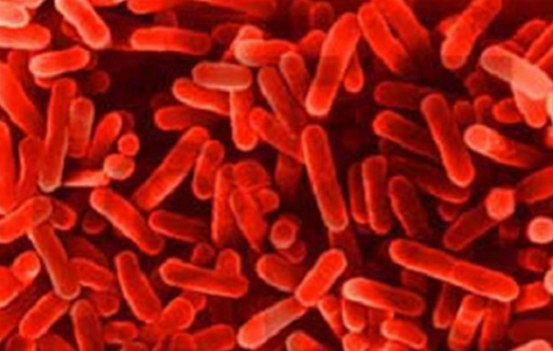 Anti-typhoid gene found, may improve vaccines
