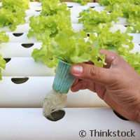Aquaponics system allows for virtually emission-free sustainable food production