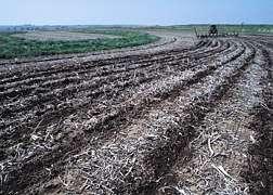ARS Scientists Help Improve Soil Carbon Calculations