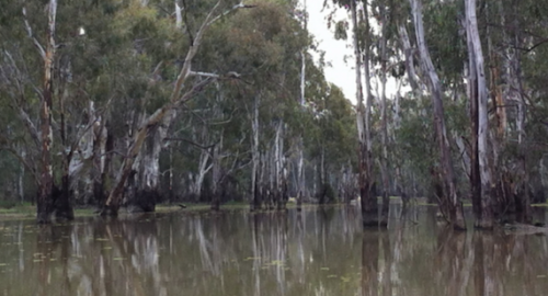 Australia placed to be world water leader