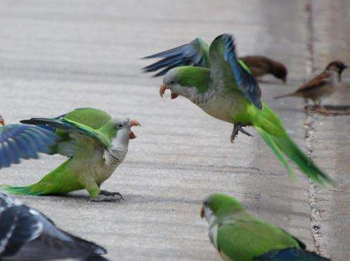 Being social: Learning from the behavior of birds