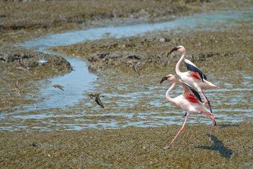 Biodiversity can flourish on an urban planet