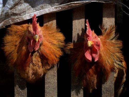 Bird flu tests were conducted at two infected sites in Canada— a turkey farm and a chicken breeding facility, said officials