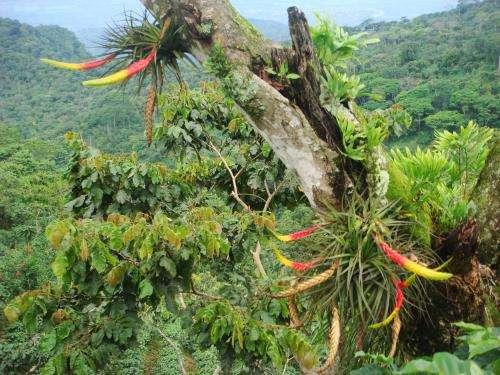 Blame coffee farm rust fungus for rising coffee prices