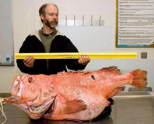 BOFFFFs (big, old, fat, fertile, female fish) sustain fisheries