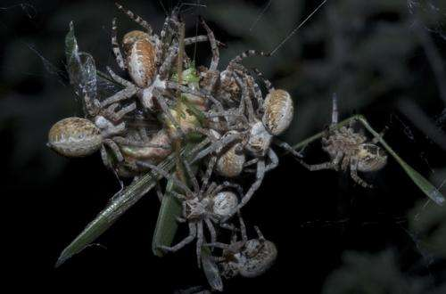 Bold spiders ensure a bright future for the whole colony