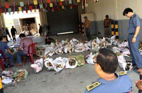 Cambodian customs officials are pictured with a haul of seized ivory at a port of Sihanoukville on May 9, 2014