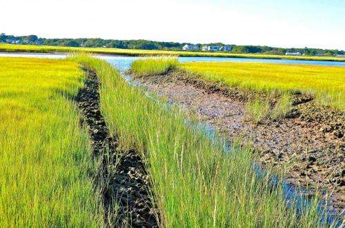 Cape Cod saltmarsh recovery looks good, falls short