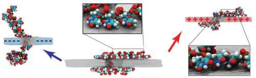 Charged graphene gives DNA a stage to perform molecular gymnastics