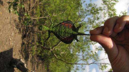 Christmas colors disguise gliding lizards in the rainforest