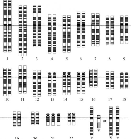 Chromosome 21