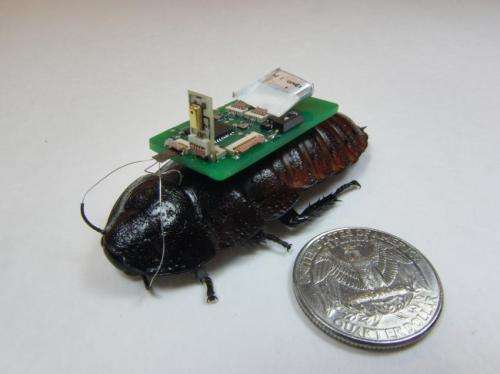 Cockroach cyborgs use microphones to detect, trace sounds